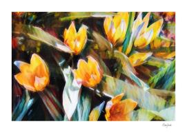 Species tulips-watercolour
