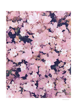 closeup blooming pink flower background