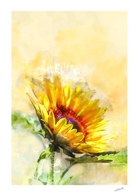 Blossom Sunny