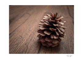 Fall Pine Cone