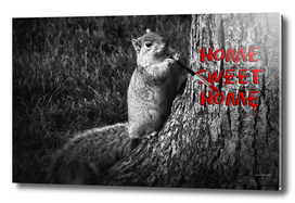 Home Sweet Home Squirrel