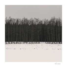 Winter Woods