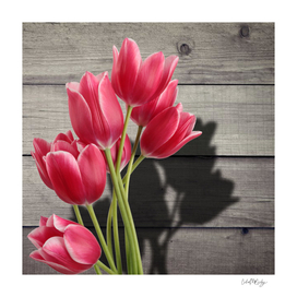 Pink Tulips & Shadow Wooden Background