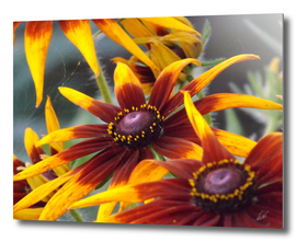 Yellow brown flower