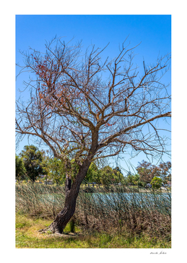 Bare tree with no leaves in winter afternoon
