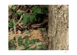Lizard in woods