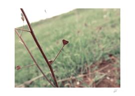 Hearth plant
