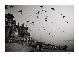 The Morning Birds