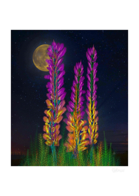 Desert Candle Foxtail Lily