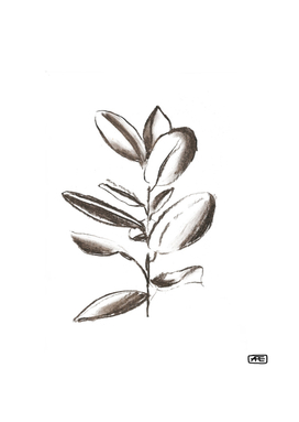 Charcoal branch