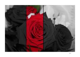 Photo Bouquets de Roses