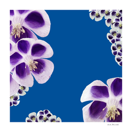 Purple flowers & Blue Background
