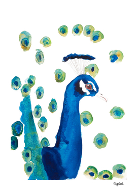 Peacock special bird illustration