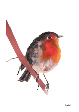 Robin robin special bird illustration