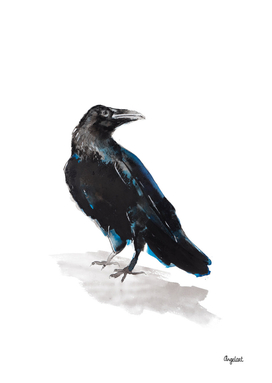 Jackdaw special bird illustration