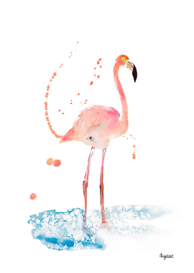 Flamingo special bird illustration