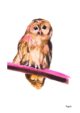 Owl special bird illustration