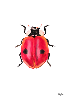 Print of a ladybug, special insect illustration