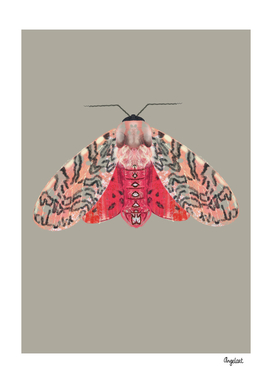 Moth pink red on scuttled background