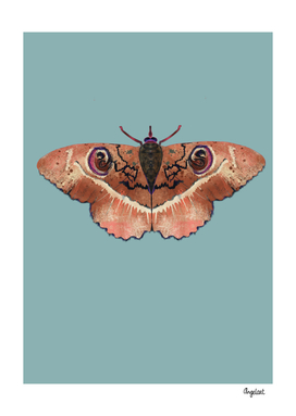 Moth Terra colored background