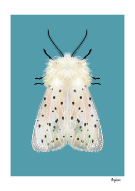 White moth colored background