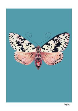 Moth black spots