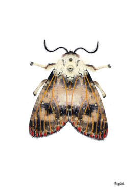 Moth with red dots on white background