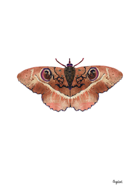 Moth terra color on white background