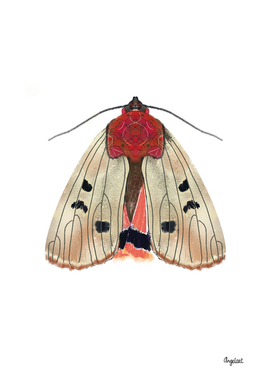 Moth cream on white background