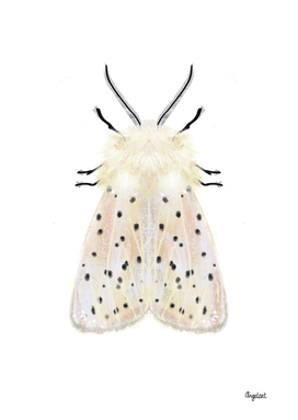 White moth on white background