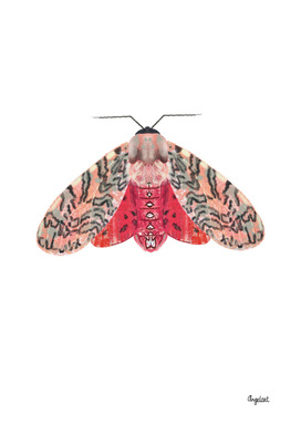 Moth pink red on white background