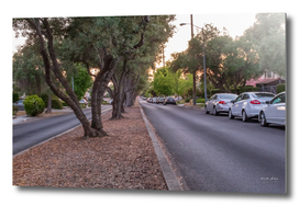 City street lined with Olive trees and cars in the evening