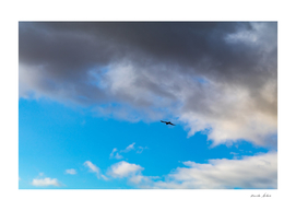 Eagle flying high in blue sky with dramatic black clouds