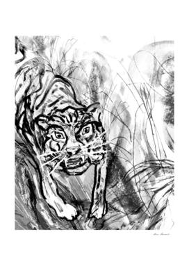 Tiger in the jungle white-black
