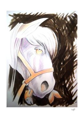 Pony, serie del pez