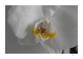 Photo Orchidée Blanche