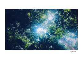 Jungle shades