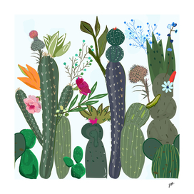 Cactus and succulents with colorful flowers