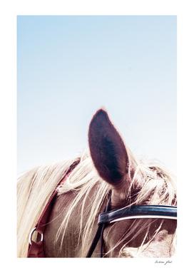 Horse III 60x90