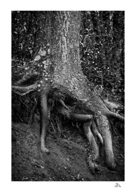 Roots...