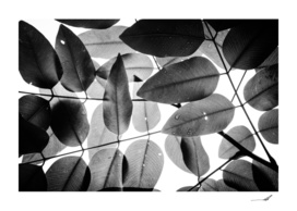 Experiments with Leaves