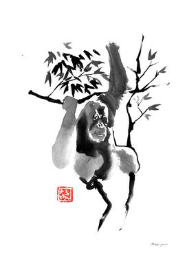 orang outan 04