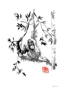orangutan 04