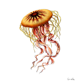animal art forms in nature jellyfish