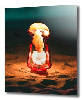 jelly fish glow