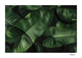 anthurium green leaves