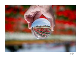 Tulips on a Crystal Ball