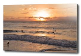 sunrise V