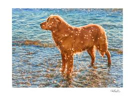 Brown Dog at Shore of Sea
