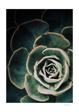 DARKSIDE OF SUCCULENTS IV-4